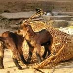 nepal-392_1280-dzikababa
