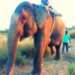 rajastan-goa-slonie-wyprawa-dzikababa
