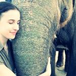 slon-rajastan-wyprawa-dzikababa