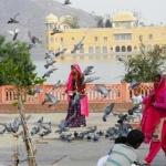 jaipur-wyprawa-rajastan-dzikababa