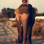 slon-sampa-rajastan-goa-wyprawa-dzikababa