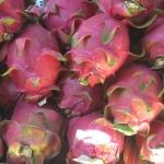 dragonfruit-wietnam-dzikababa-2