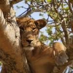 safari-afryka-dzikababa-zanzibar
