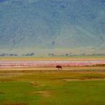 safari-afryka-ngorongoro-zanzibar-dzikababa