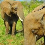 safari-afryka-zanzibar-dzikababa-2
