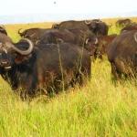 safari-afryka-zanzibar-serengeti-dzikababa