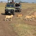 safari-serengeti-zanzibar-tramping-dzikababa